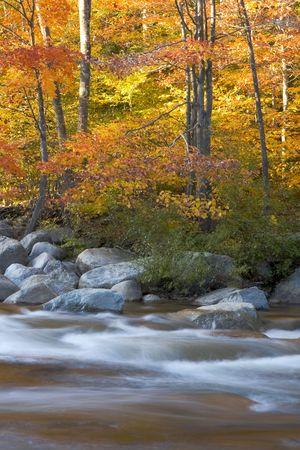 hampshire: Follaje de ca�da a lo largo del r�o Pemigewasset en la Cordillera Blanca de New Hampshire.  Foto de archivo
