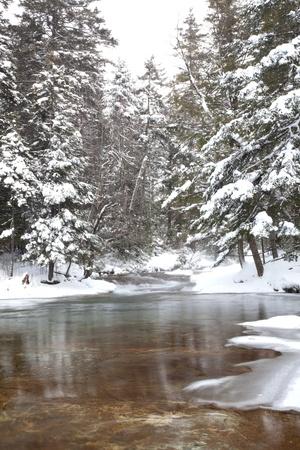 freshly fallen snow: Fondo oro e verdastro fiume mostrare attraverso acqua cristallina.  Neve fresca su alberi di pino nel montagne bianche del New Hampshire. Orientamento verticale.