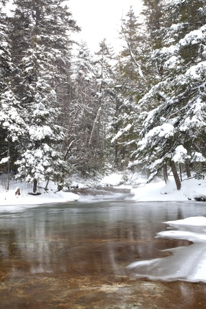 white winter: Gold and greenish river bottom showing through crystal clear water.  Freshly fallen snow on pine trees in the White Mountains of New Hampshire. Vertical orientation. Stock Photo