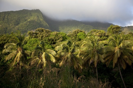 dominica: Rainforest and volcanic mountains on Caribbean island of Dominica.
