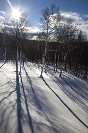 freshly fallen snow: Long shadows of birch trees in freshly fallen snow