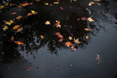 bladeren en reflectie van de boom vielen zij uit in een plas in een asfalt oprit herfst