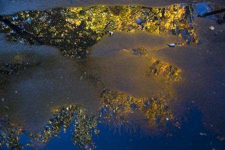 Boom met kleurrijke bladeren weerspiegeld in plas