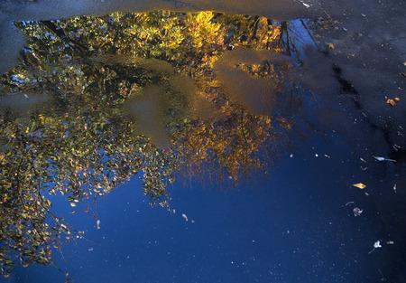 Weerspiegeling van een boom met de herfst bladeren in een plas in een oprit