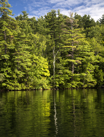 Rippled reflections of trees in Squam Lake, New Hampshire Stockfoto