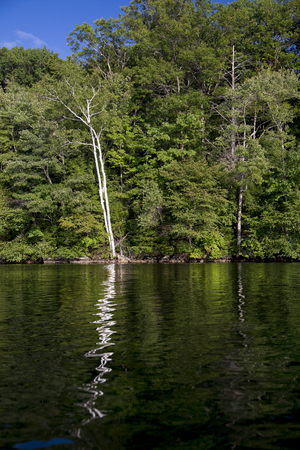 Two white birches reflected in the dark water of Squam Lake, New Hampshire Stockfoto