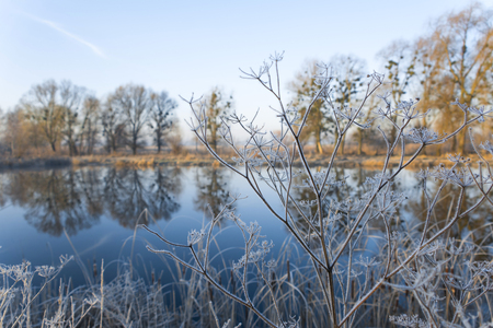 Autumn landscape. Plants covered with hoarfrost against the background of the lake. Stock Photo