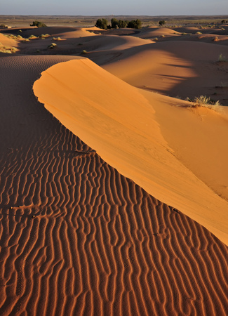 Three beetles and their tracks in the sand at the top of the Erg Chebbi dune in Morocco. Africa. Reklamní fotografie