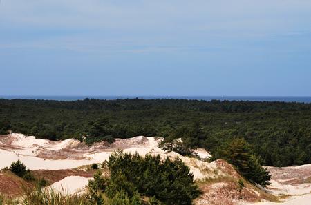 arenas movedizas: Dunas de arena en el parque nacional de Polonia