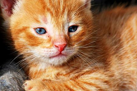 goodly: Kitten in the backyard Stock Photo