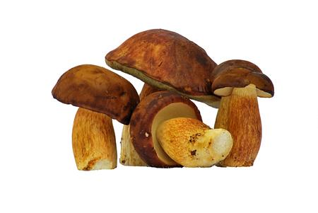 cull: Bolete mushroom