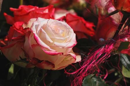 profesar: Rosas