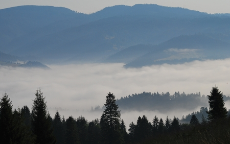 wooded: Wooded hills with gentle mist. Pieniny National Park - Poland Stock Photo