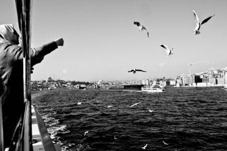 Gulls on the Bosporus fed by passengers