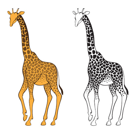 Set of two giraffes isolated on white background  Wall stickers Vector