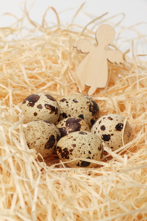 reproduce: Quail eggs in a nest of hay close-up.