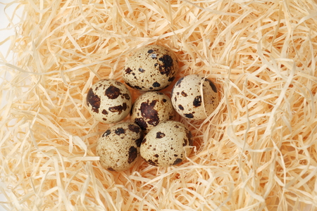 Quail eggs in a nest of hay close-up.