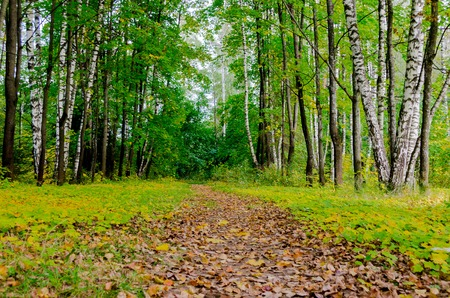 Path in the autumn park. Autumn Landscape. Park in Autumn. Forest  in Autumn. Dry leaves in the foreground.