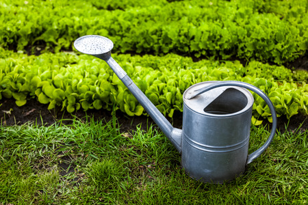 Closeup photo of metal watering can on grass at garden photo