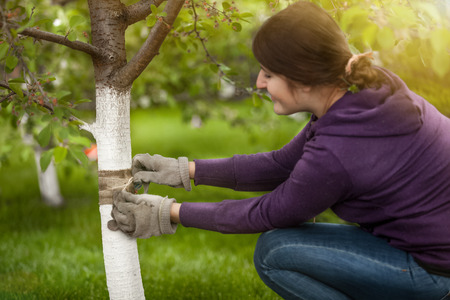 Portrait of young woman tying band on tree bark to prevent insects