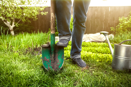 garden tool: Closeup photo of man holding foot on shovel at garden at sunny day