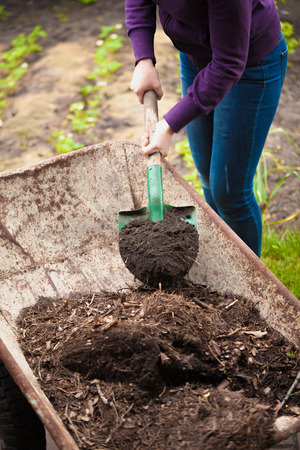 earthing: Closeup photo of woman taking compost from wheelbarrow with shovel