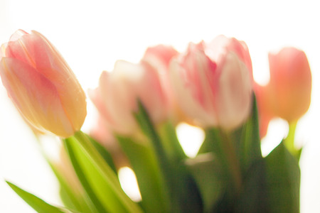 Closeup blurred shot of pretty pink and red tulips photo