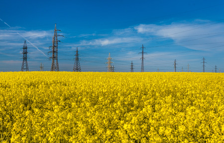 Outdoor photo of electric towers in rapeseed against blue sky photo