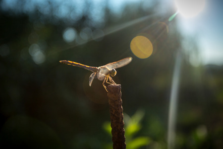 Closeup shot of dragonfly sitting on branch at sunny day photo