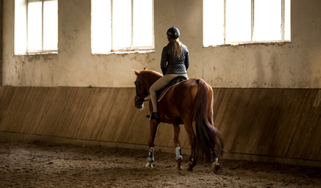 Photo from back of woman doing horseback riding in manege Stock Photo