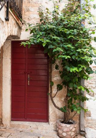 outdoor shot: Outdoor shot of red wooden door with growing green ivy