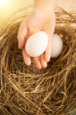 life giving birth: Closeup photo of hand holding white egg against nest lit by sun Stock Photo