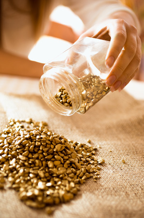 Closeup photo of miner empties the jar with gold on the burlap photo