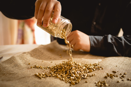 Adult man emptying glass jar with golden nuggets photo