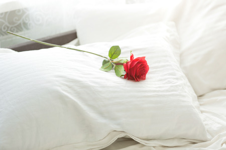 bed sheets: Closeup photo of red rose lying on white pillow at bed Stock Photo