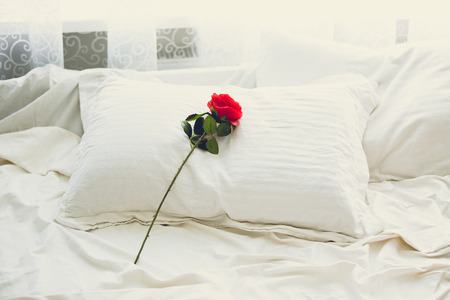 bed sheets: Toned photo of red rose lying on bed at morning