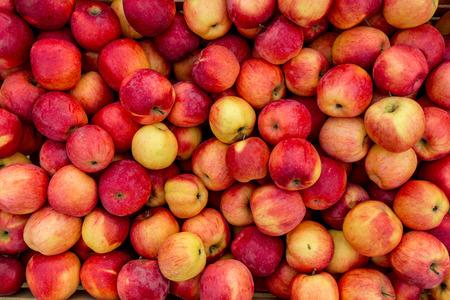 Colpo del primo piano di mele fresche rosse e gialle