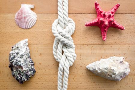 seashell: Closeup shot of seashells, starfish and knot from sailing travels
