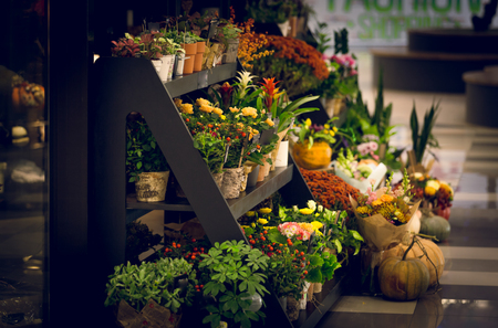 sidewalk sale: Toned photo of wooden stand with flowers at florist shop