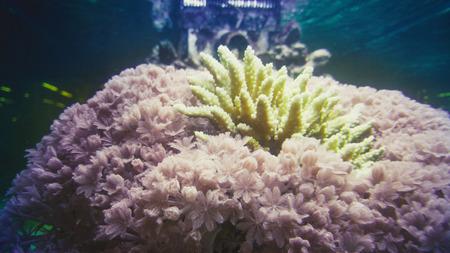 Closeup photo of beautiful corals and seaweeds underwater