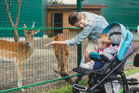mother and baby deer: Cute baby boy with young mother feeding little deer through fence in zoo Stock Photo