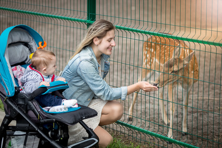 mother and baby deer: Happy young mother with her baby boy feeding beautiful deer in the zoo