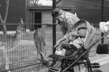 mother and baby deer: Black and white image of happy young mother walking with her baby boy in pram at the zoo