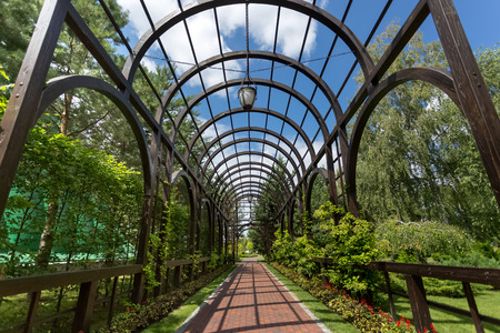 Beautiful long pergola overgrown with ivy at park