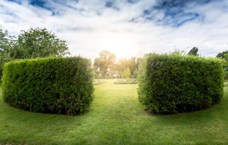 Toegang tot decoratieve bush labyrint in het park op zonnige dag Stockfoto