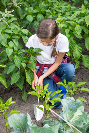 earthing: Beautiful young girl digging earthing soil at vegetable garden bed