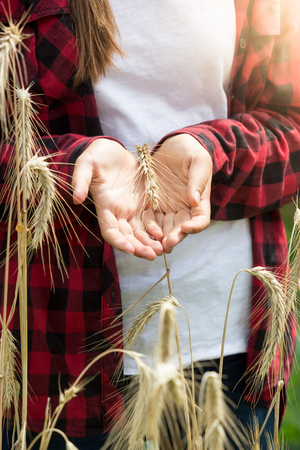 cereals holding hands: Closeup toned photo of young woman holding ripe wheat ears in field at sunny day Stock Photo