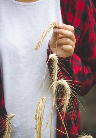 Closeup of young woman in checkered shirt holding golding wheat ears in hand