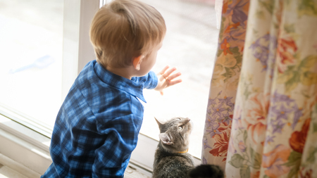 Little toddler boy opens dorr on street to domestic cat 스톡 콘텐츠