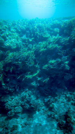 Panoramic underwater image of beautiful coral reef and swimming tropical fishes